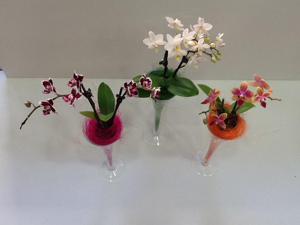 Celebramos el Día de los Enamorados regalando una flor